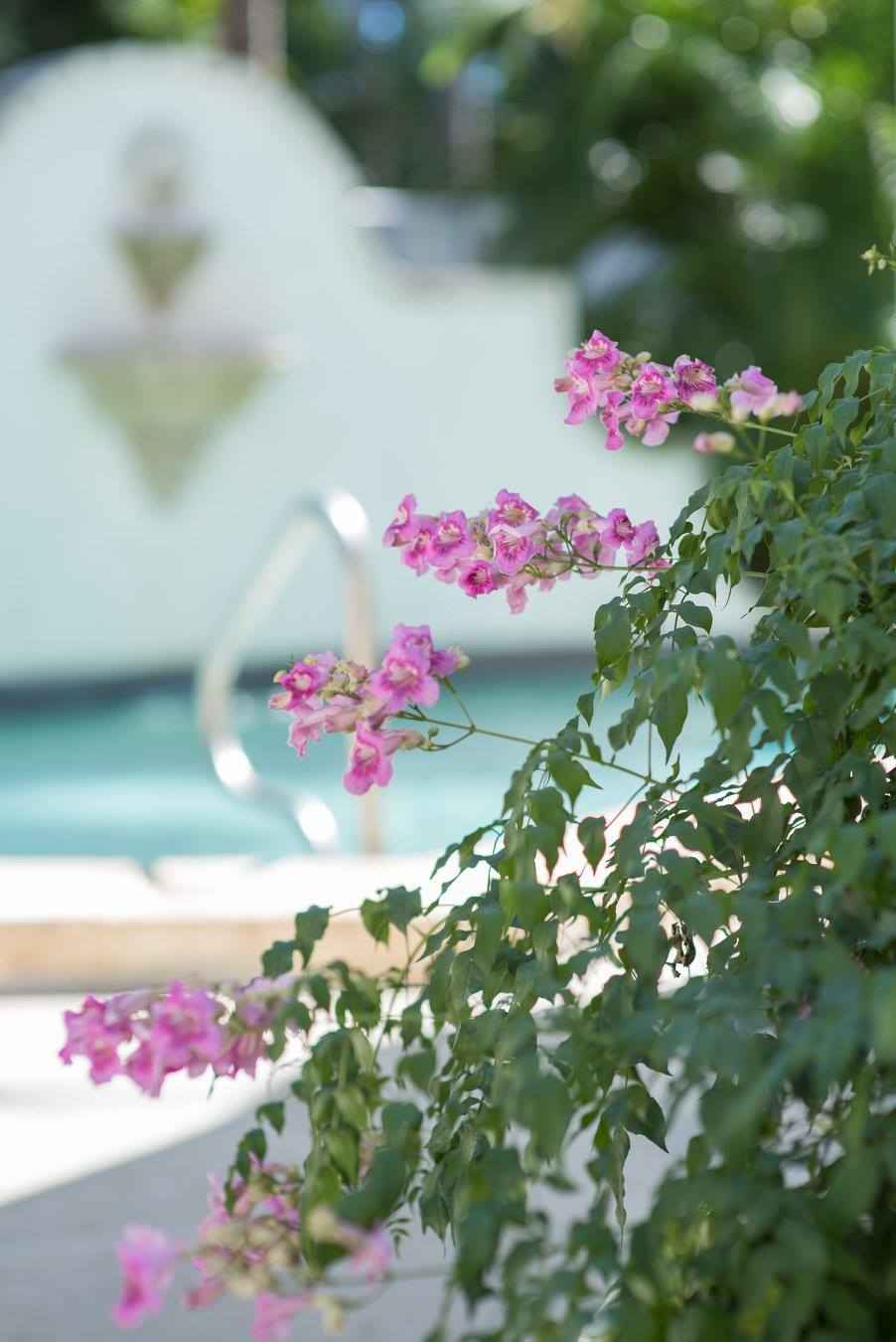 flower with burred pool in background