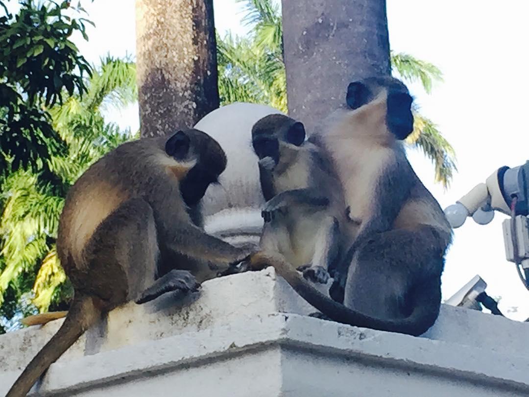 monkeys on a wall